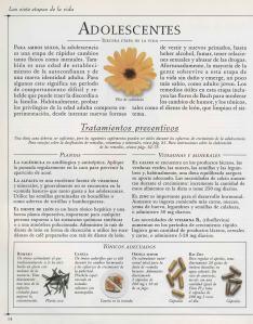 Plantas - Plantas Medicinales en Casa-013