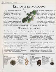 Plantas - Plantas Medicinales en Casa-019