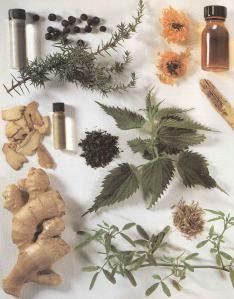 Plantas - Plantas Medicinales en Casa-027