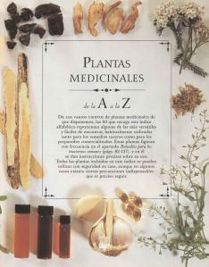 Plantas - Plantas Medicinales en Casa-028