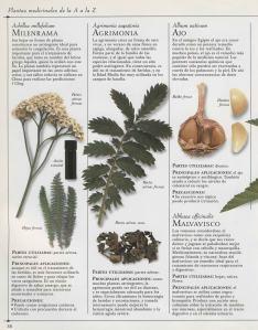 Plantas - Plantas Medicinales en Casa-029