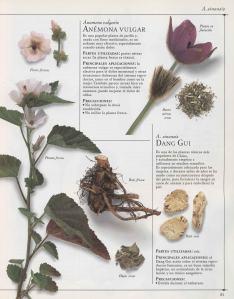 Plantas - Plantas Medicinales en Casa-030
