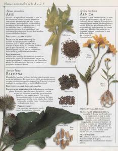 Plantas - Plantas Medicinales en Casa-031