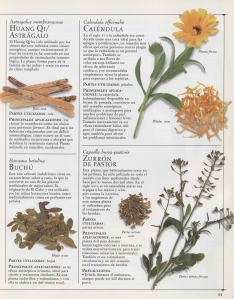 Plantas - Plantas Medicinales en Casa-032