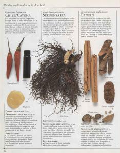 Plantas - Plantas Medicinales en Casa-033