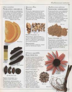 Plantas - Plantas Medicinales en Casa-034
