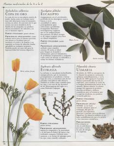 Plantas - Plantas Medicinales en Casa-035