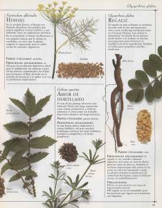 Plantas - Plantas Medicinales en Casa-036