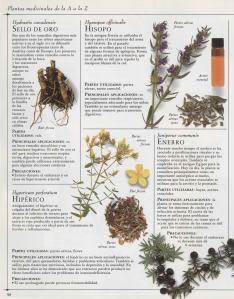 Plantas - Plantas Medicinales en Casa-037