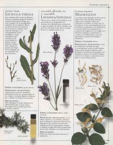 Plantas - Plantas Medicinales en Casa-038