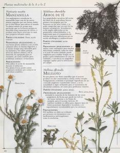 Plantas - Plantas Medicinales en Casa-039
