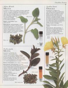 Plantas - Plantas Medicinales en Casa-040