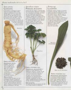 Plantas - Plantas Medicinales en Casa-041