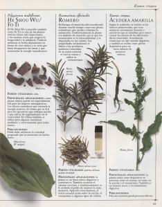 Plantas - Plantas Medicinales en Casa-042