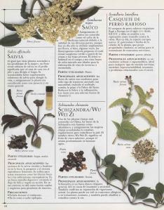 Plantas - Plantas Medicinales en Casa-043