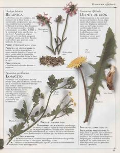 Plantas - Plantas Medicinales en Casa-044