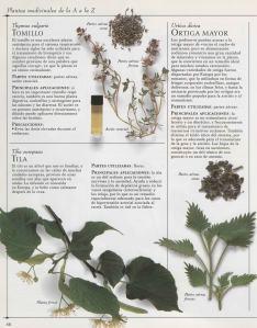 Plantas - Plantas Medicinales en Casa-045