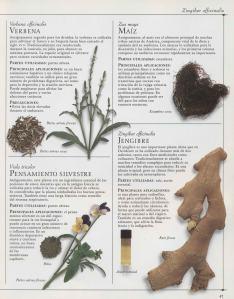 Plantas - Plantas Medicinales en Casa-046