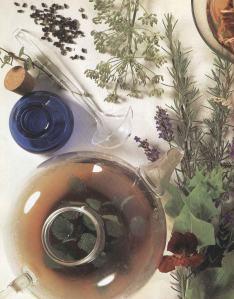 Plantas - Plantas Medicinales en Casa-047