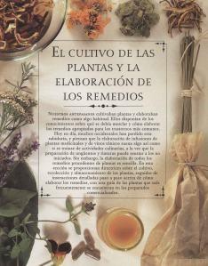 Plantas - Plantas Medicinales en Casa-048