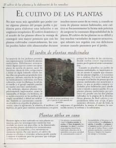 Plantas - Plantas Medicinales en Casa-049