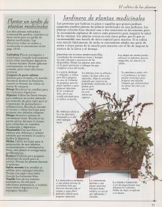 Plantas - Plantas Medicinales en Casa-050