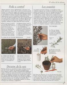 Plantas - Plantas Medicinales en Casa-052