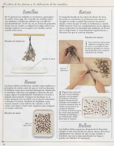 Plantas - Plantas Medicinales en Casa-055