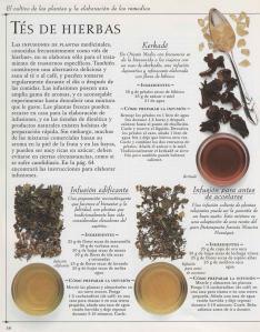 Plantas - Plantas Medicinales en Casa-057
