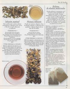 Plantas - Plantas Medicinales en Casa-058
