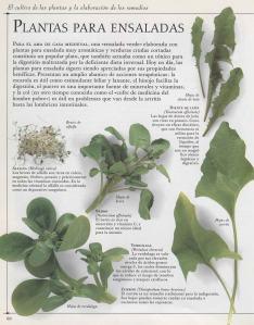 Plantas - Plantas Medicinales en Casa-059