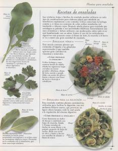 Plantas - Plantas Medicinales en Casa-060