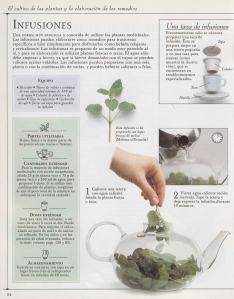 Plantas - Plantas Medicinales en Casa-063