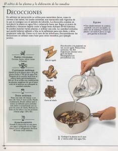 Plantas - Plantas Medicinales en Casa-065