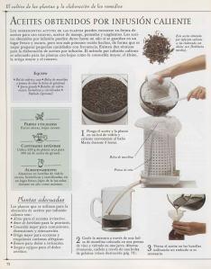 Plantas - Plantas Medicinales en Casa-071