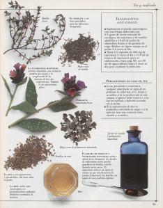 Plantas - Plantas Medicinales en Casa-084
