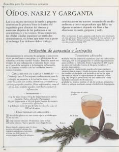 Plantas - Plantas Medicinales en Casa-087