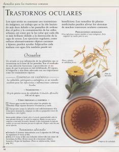 Plantas - Plantas Medicinales en Casa-091