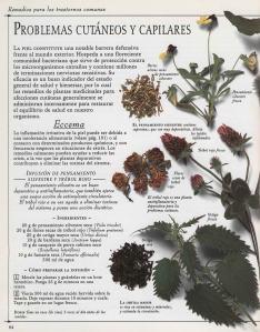 Plantas - Plantas Medicinales en Casa-093