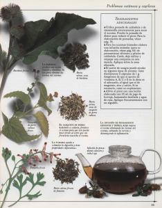 Plantas - Plantas Medicinales en Casa-094