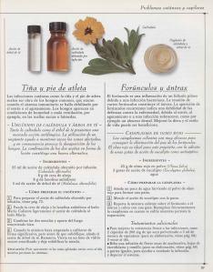 Plantas - Plantas Medicinales en Casa-096