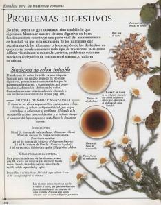 Plantas - Plantas Medicinales en Casa-101