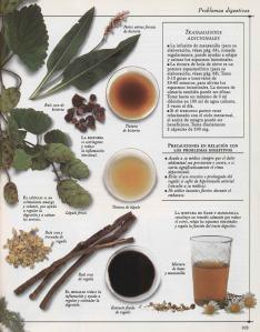 Plantas - Plantas Medicinales en Casa-102