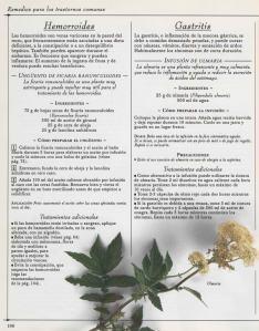 Plantas - Plantas Medicinales en Casa-105