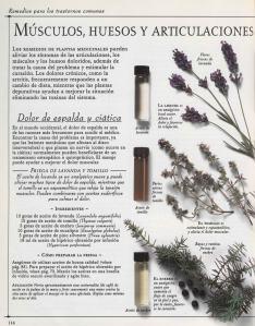 Plantas - Plantas Medicinales en Casa-113
