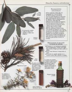 Plantas - Plantas Medicinales en Casa-114