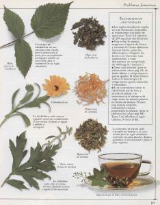 Plantas - Plantas Medicinales en Casa-120