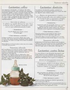 Plantas - Plantas Medicinales en Casa-128