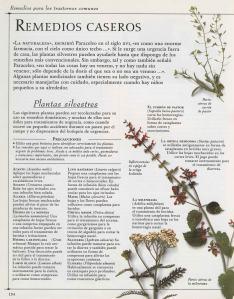 Plantas - Plantas Medicinales en Casa-133