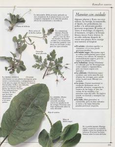 Plantas - Plantas Medicinales en Casa-134